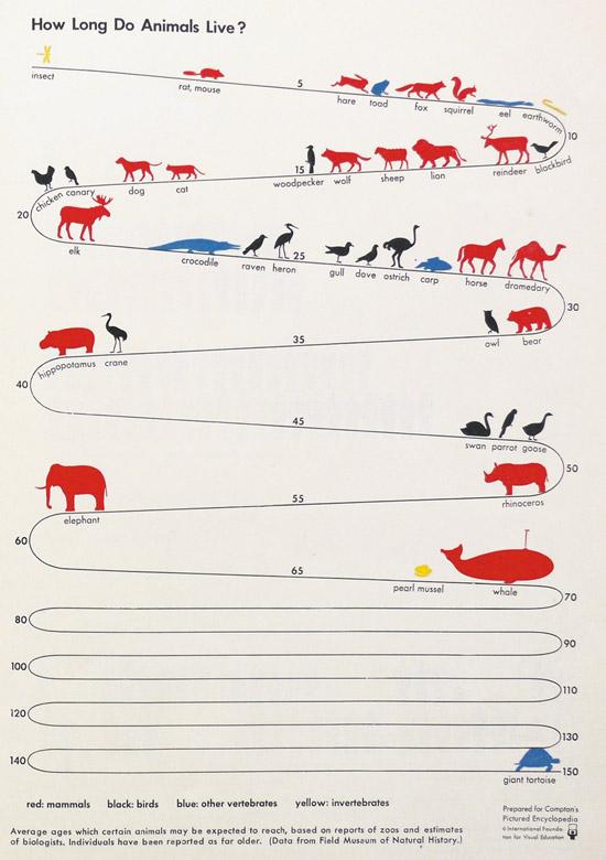 Animals life